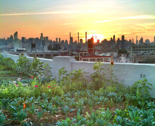Urban Farming: Brooklyn Grange Green Roof, Sustainable Farming