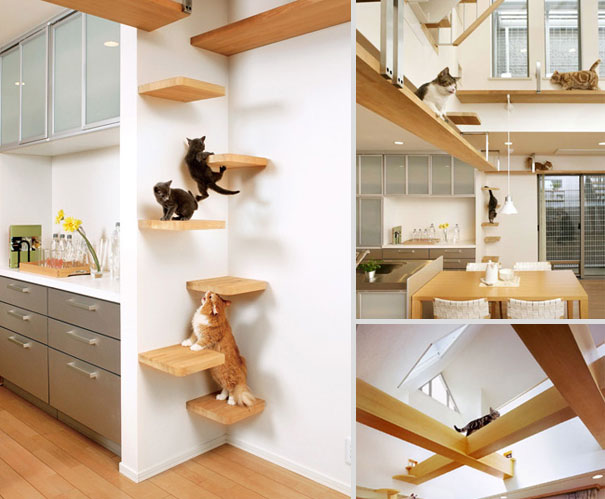 Modern Design for cats